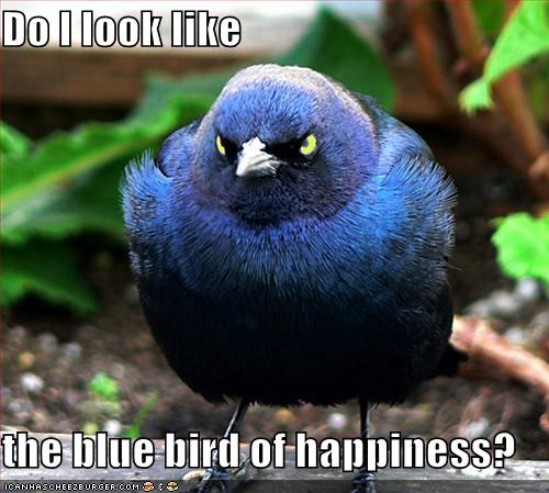 bluebird-of-unhappiness.jpg