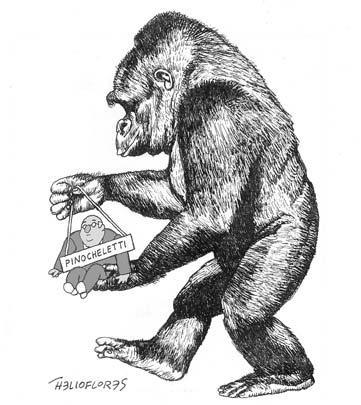 tegucigolpe-gorila.jpg