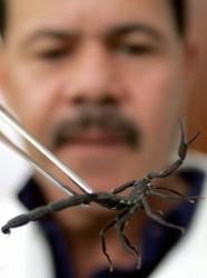 vidatox-scorpion.jpg