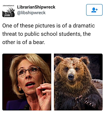 devos-bear.jpg