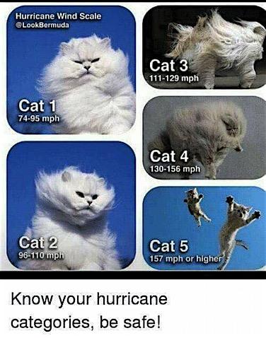 hurricane-cats.jpg