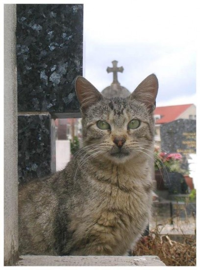 pope-kitty